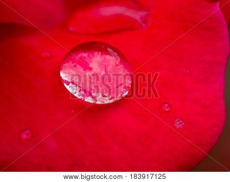 Rain Drop Sitting on Red Rose Petal
