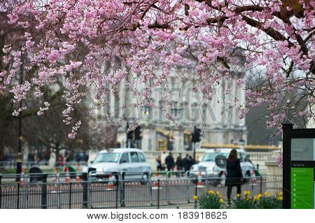 London, UK - March 16, 2017:  Buckingham palace view from the St. John park.