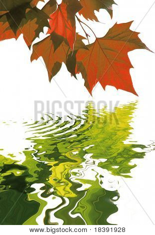 autumn concept with red maple leaves reflecting there lost summer color in the water isolated on white