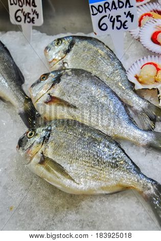 Close up of fresh silver dorada fish on a stall with ice cubes