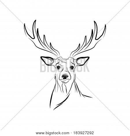 free spirit deer animal bohemic design vector illustration