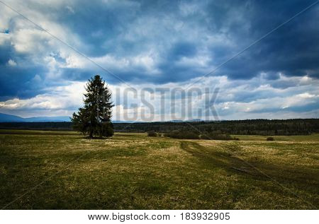background gloomy autumn landscape with tree and meadow