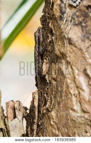 Close up of little brown gecko on the brown tree
