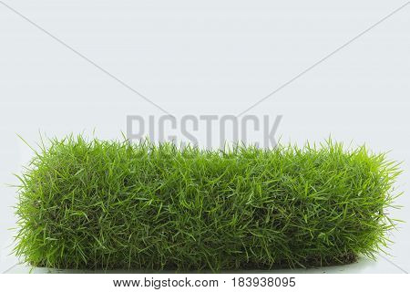 Green grass isolated on white background .
