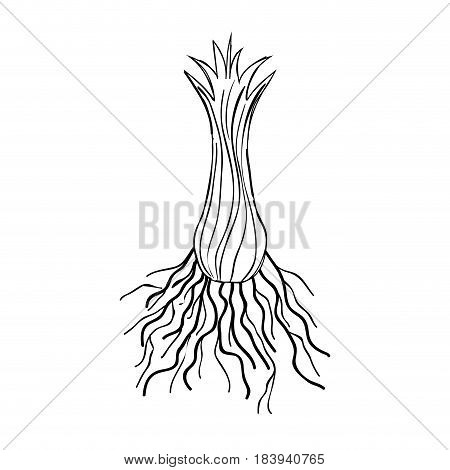 contour flower plant processing herbal botany, vector illustration