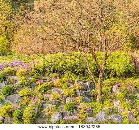 Small leafless tree on hillside landscaped with flowers and large stones and flowers with green trees and bushes in the background.