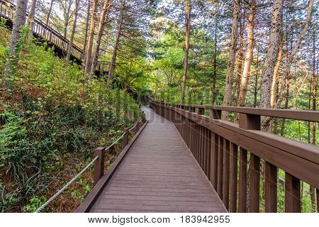 Wooden walkway through a park in a woodland forest in South Korea.