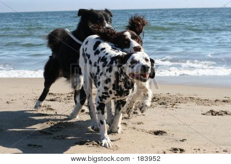 poster of 3 dogs running on the beach ** Note: Slight blurriness, best at smaller sizes