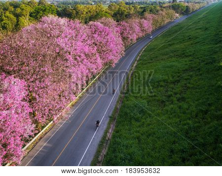 Bicycle road with pink flowe in Bangpra lake Chonburi Thailand road sport and fit concept