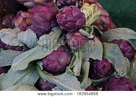 Purple Fresh Globe Artichokes On Market Display