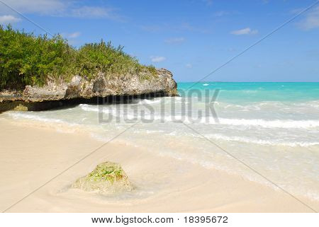 Mangrove and rocks on tropical beach of Cayo las Brujas on caribbean island Cuba