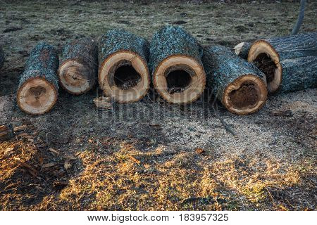 A Number Of Sawed Wood Pieces With Hollows Layed In Line