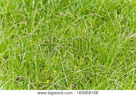 Summer picture of green saturate grass texture