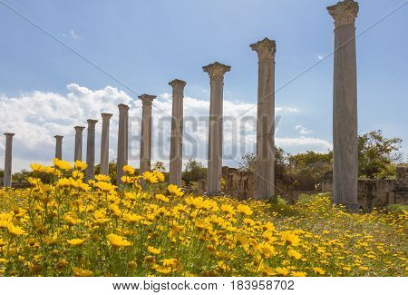 Ruins of the Ancient Roman city of Salamis near Famagusta in Cyprus with yellow daisiy flowers in the foreground