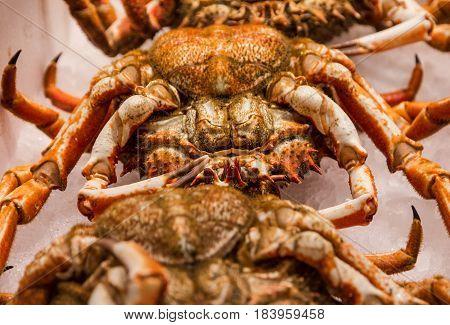 Crabs on fish market, animal food leg