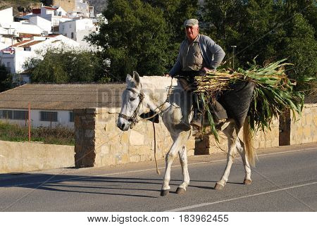 EL BURGO, SPAIN - OCTOBER 29, 2008 - Spanish man riding a white horse carrying his harvested crop El Burgo Malaga Province Andalusia Spain Western Europe, October 29, 2008.