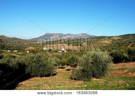 View of the olive groves and houses in the Spanish countryside El Burgo Malaga Province Andalusia Spain Western Europe.