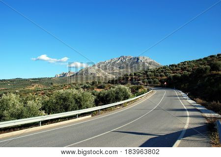 Road leading through olive groves towards the mountains El Burgo Malaga Province Andalusia Spain Western Europe.