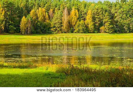 Autumn landscape of Soroti river and autumn forest trees in Pushkinskiye Gory Russia - autumn natural landscape of autumn forest nature lit by bright autumn sunlight. Soft focus processing. Autumn forest landscape. Autumn nature