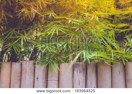 Texture of bamboo trunk with bamboo leaves background. (Autumn filter effect)