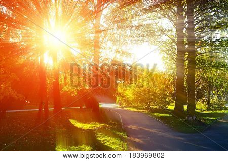 Beautiful sunny autumn. Autumn natural view autumn park in sunset. Sunny autumn landscape colorful autumn nature in nice sunny weather at autumn sunset autumn landscape view