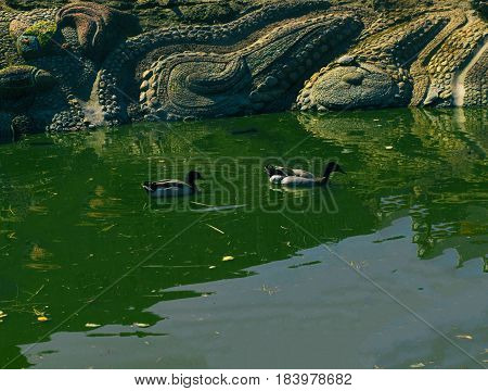 City pond Spring Summer Daylight, beautiful nature