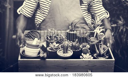 Adult Man Hands Carrying House Plants in Wooden Box