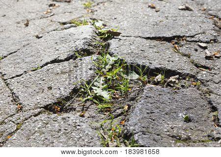 cracked asphalt, a sidewalk damaged by grass