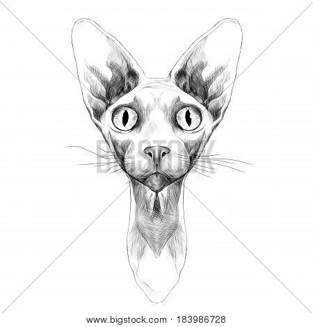 cat of breed the Sphinx head is symmetrical sketch vector graphics black and white drawing