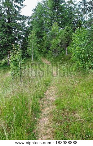 Trodden path on the of the forested mountain