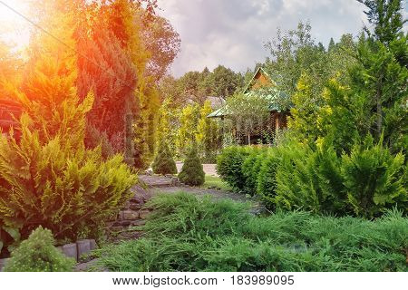 Coniferous garden with decorative arbor in sunlight