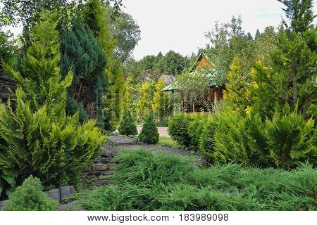 Coniferous summer garden with nice decorative arbor