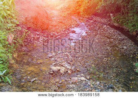 Narrow creek between trees in forest park in sunlight