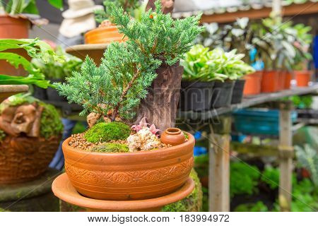 Bonsai trees shrubs small ornamental garden garden decorations