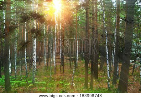 Summer forest landscape in Chashkovskoe stone settlement situated in Southern Urals Russia. Mixed summer forest and aged stone remnants between the summer forest trees. Soft filter applied.Forest summer background