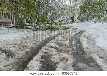 Spring landscape after unexpected April snow storm in Dnepr city Ukraine