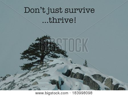 Single pine tree thriving atop a snow capped mountain with the text
