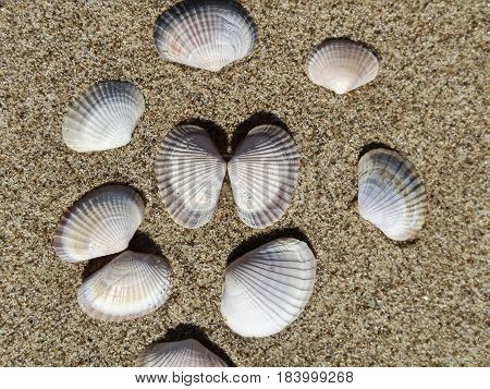 Background of river sand with beautiful seashells. Close-up. Place for text. Nature.
