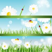 Summer banners with daisy and ladybugs in green grass poster