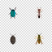 Realistic Dor, Bug, Emmet And Other Vector Elements. Set Of Animal Realistic Symbols Also Includes Emmet, Dor, Sting Objects. poster