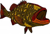 vector - fish gag grouper isolated on white background poster