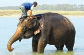 mounting an elephant (series: part 5 out of 5) poster
