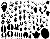 Collection of vector outlines of animal foot prints poster