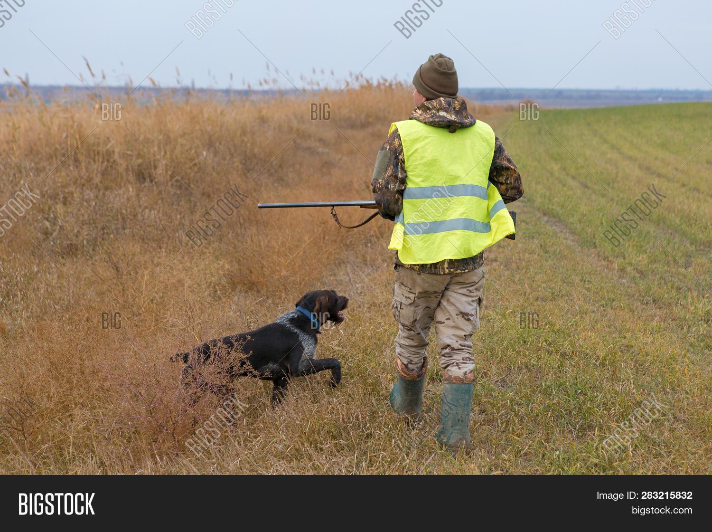 Hunter Gun Dog Go On Image Photo