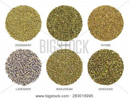 Culinary Herbs For Herbes De Provence. Herbal Circles. Dried Rosemary, Savory And Thyme Are Always U