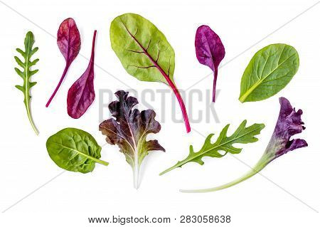 Salad Leaves Collection. Isolated Mixed Salad Leaves With Spinach, Chard, Lettuce, Rucola On White B