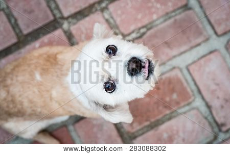 quirky shot of friendly small dog looking up expectantly into camera poster
