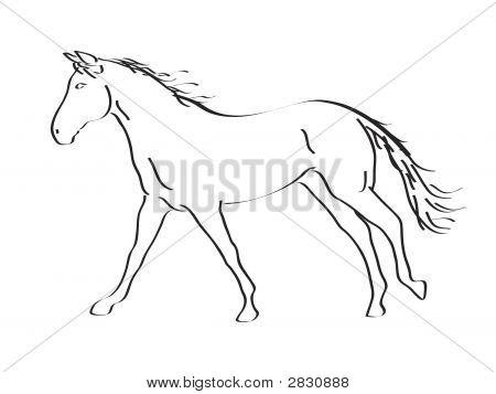 Calligraphic Horse