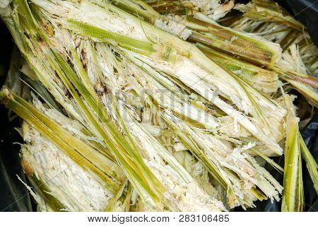 Closeup Of Sugarcane Bagasse In A Black Garbage Bag After Make Juice. For Now Sugarcane Bagasse Can