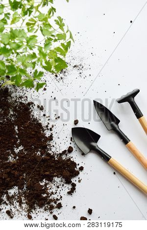 Gardening Equipment. Seeding Or Planting A Plant On Soil Background. Natural Background For Advertis
